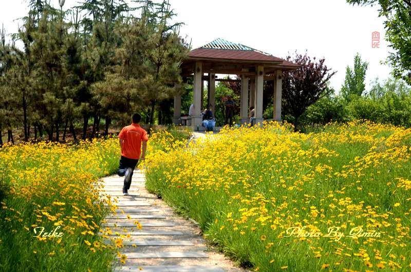 【原创影记】印象弥河湿地公园5: 迷人风景1 - 古藤新枝 - 古藤的博客