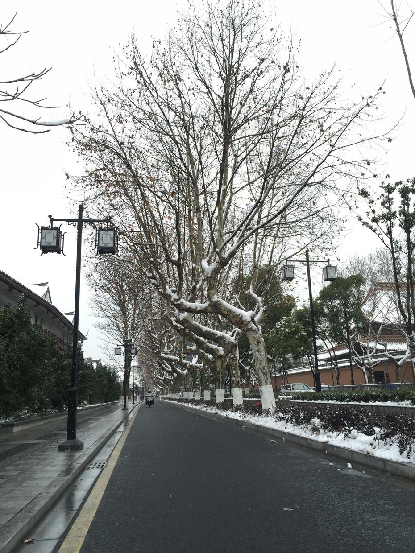 一场雪,把苏州美成了姑苏 - 蔷薇花开 - 蔷薇花开的博客