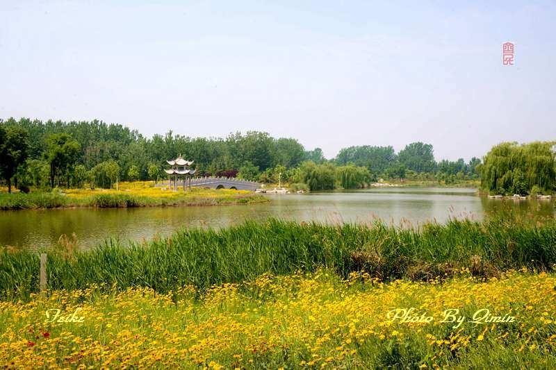 【原创影记】印象弥河湿地公园5: 迷人风景2 - 古藤新枝 - 古藤的博客