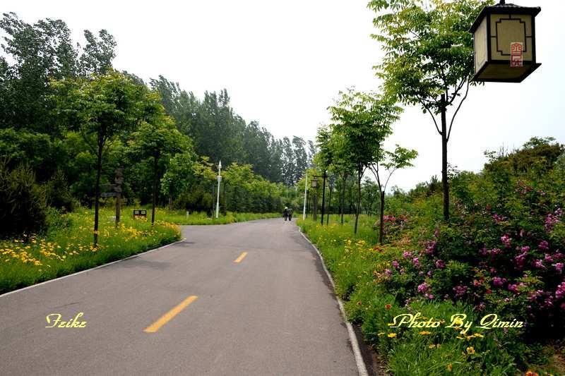 【原创影记】印象弥河湿地公园4: 迤逦园径(续) - 古藤新枝 - 古藤的博客