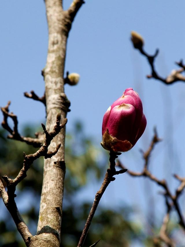 仙湖植物园赏花 - 小马马倌 - 小马马倌的博客