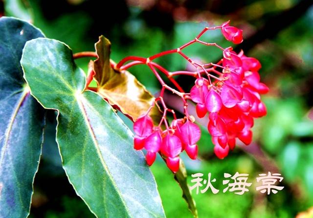 赏花打鸟 - 小马马倌 - 小马马倌的博客