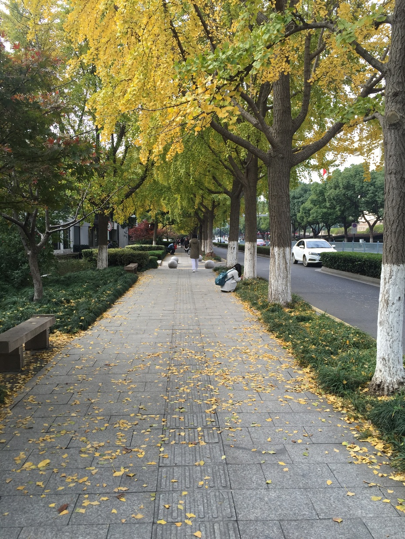 从道前街到十梓街 - 蔷薇花开 - 蔷薇花开的博客