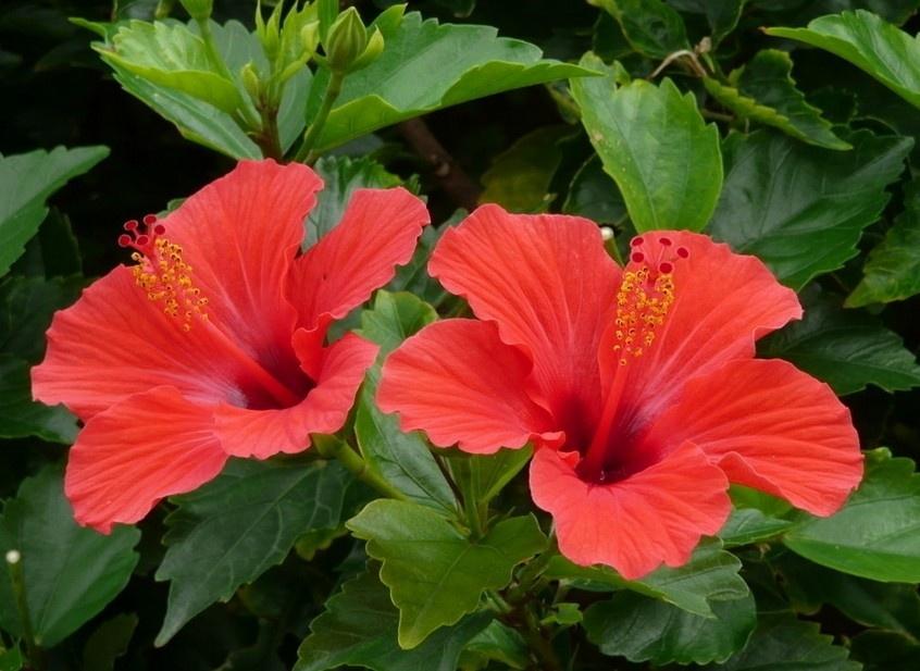 春季,到西双版纳热带植物园赏花 - 西双版纳热带植物园 - 西双版纳热带植物园的博客