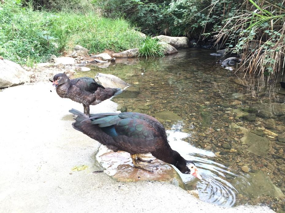 山乡小溪中游荡的鸭子 - 余昌国 - 我的博客