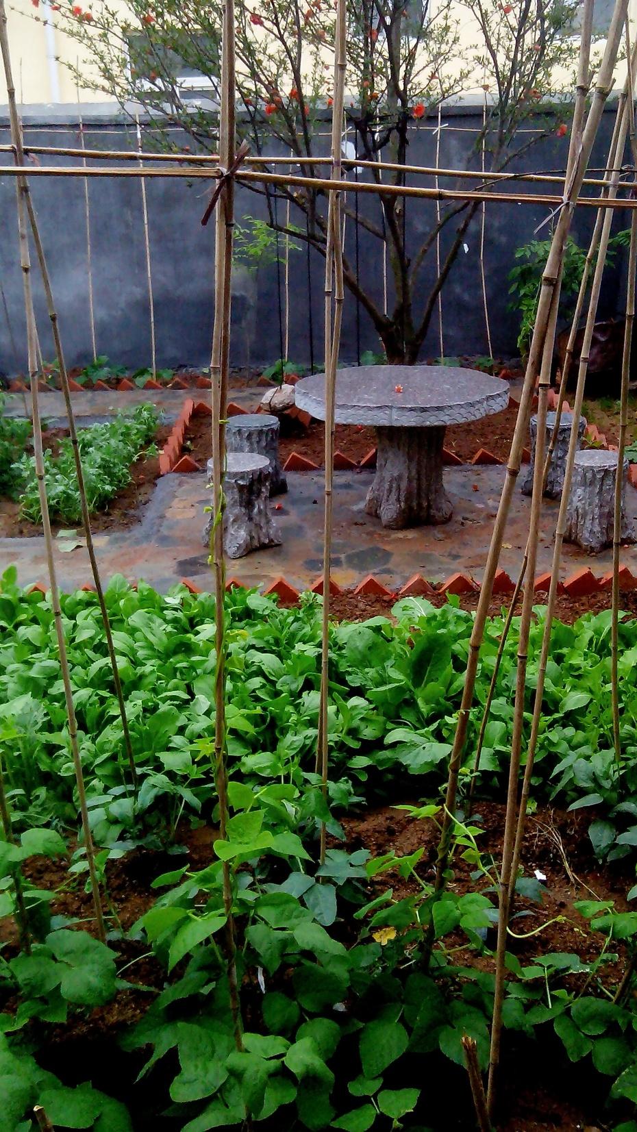 乡村小院之石桌石凳图片