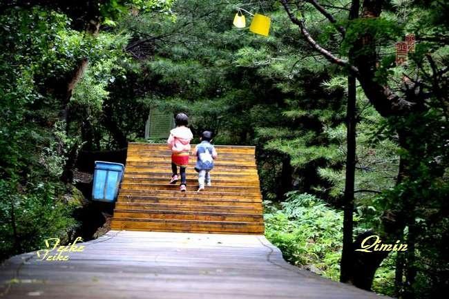青甘记行05:孟达天池(下) - 古藤新枝 - 古藤的博客