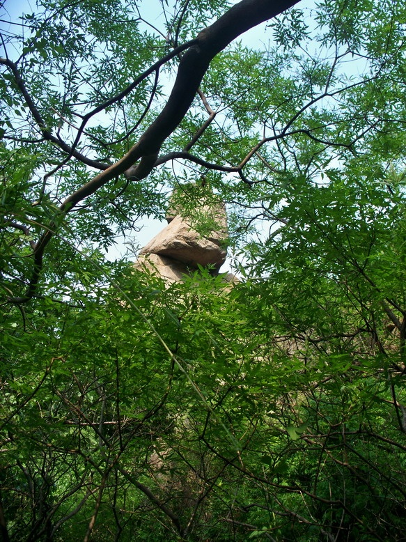 2016-6-4 乐水行之16季-24  采桑椹的小伙伴就是酱紫 - stew tiger - 乐水行的风斗