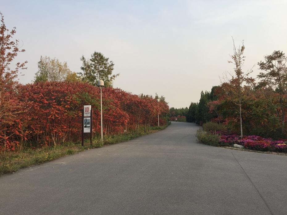 北京奥森公园秋日即景图片