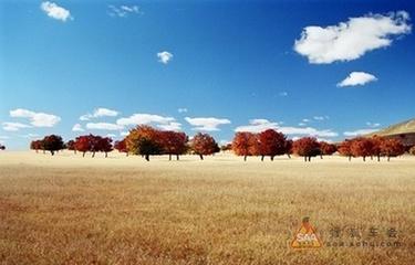 秋天的狂想(原创散文) - 泉水叮咚 - 泉水叮咚