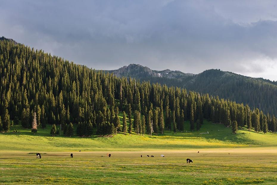 大美新疆:天山牧场 - 余昌国 - 我的博客