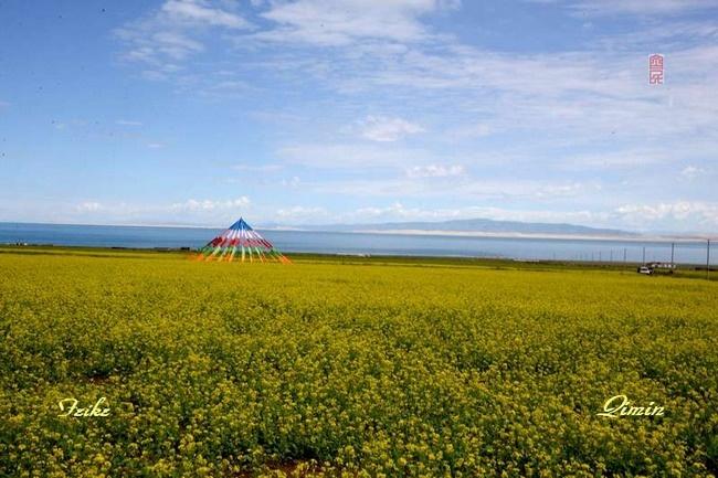 青甘记行17: 大美青海湖(四) - 古藤新枝 - 古藤的博客