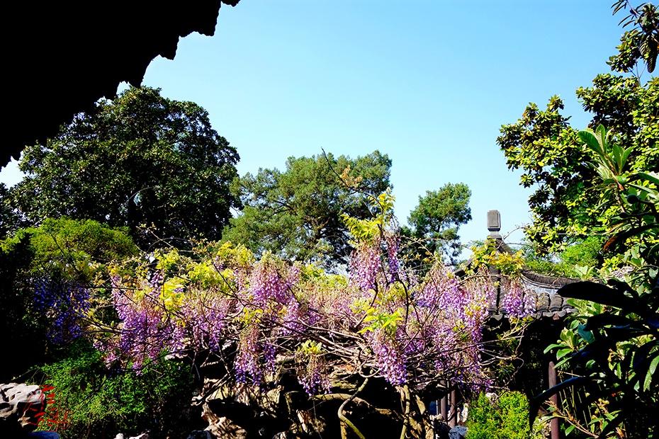 烟花三月 我们在扬州相聚(2)清风古韵 感受园林之美 - rzlt9688 - 人在旅途rzlt