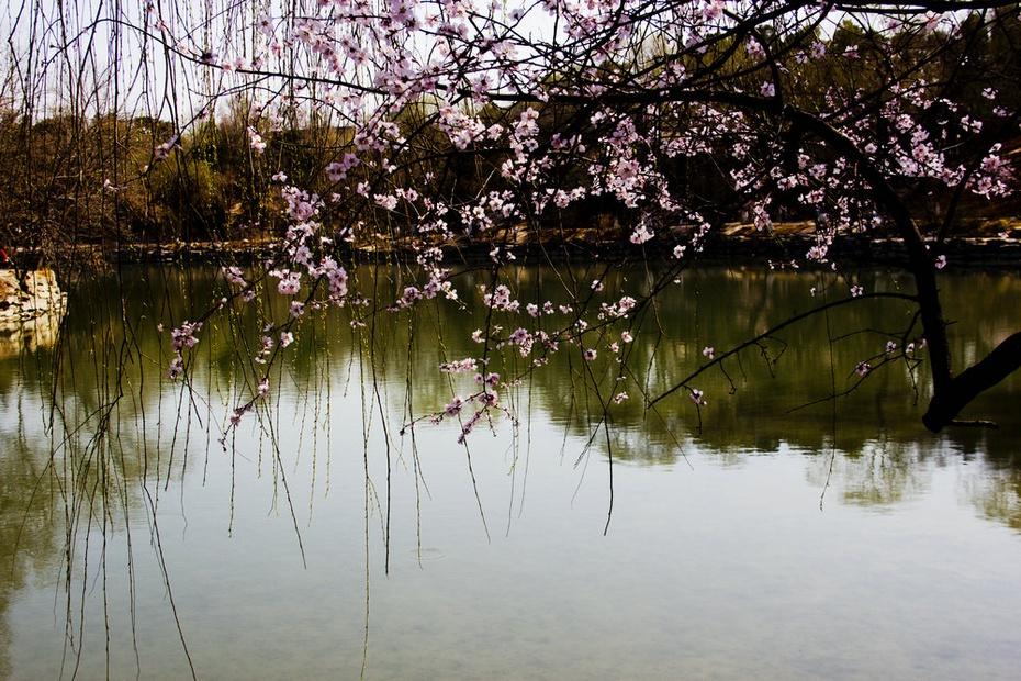 春风又绿未名湖畔,燕园春色是否依然 - 侠义客 - 伊大成 的博客