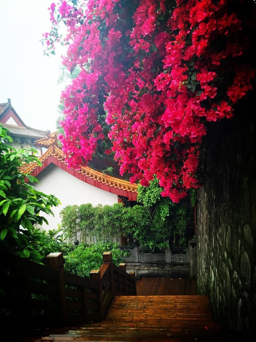 茅台镇里闻酒香 - yushunshun - 鱼顺顺的博客