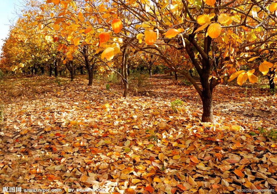 至少自己还能享受秋天的风景,享受金秋的美丽,自己还年轻有力气,能
