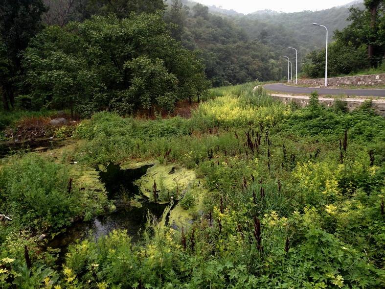 2017-7-18 影随风2017季-41 怀沙河寻水3,响水可从山中来? - stew tiger - 风过的声音
