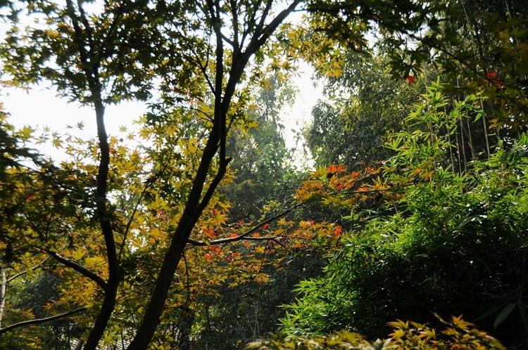 杭州花圃:秋日的沉静和美丽 - 海军航空兵 - 海军航空兵