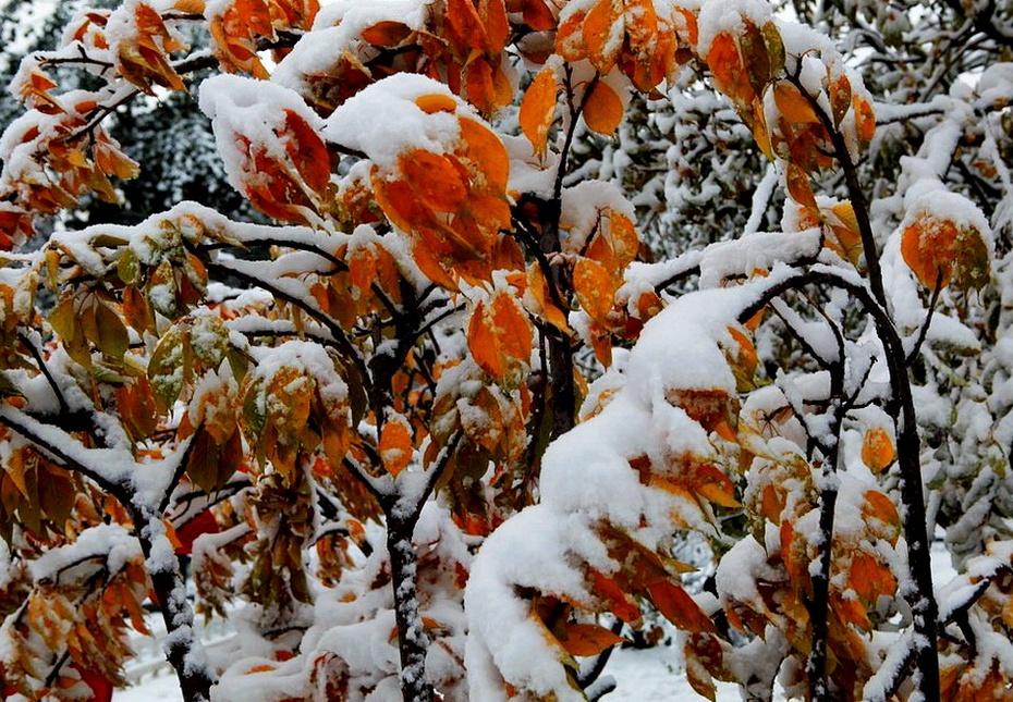 但见红叶艳秋色 更喜白雪走冬霾 - 海军航空兵 - 海军航空兵