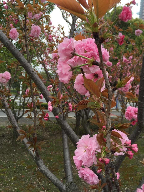 家门口的风景 - 蔷薇花开 - 蔷薇花开的博客