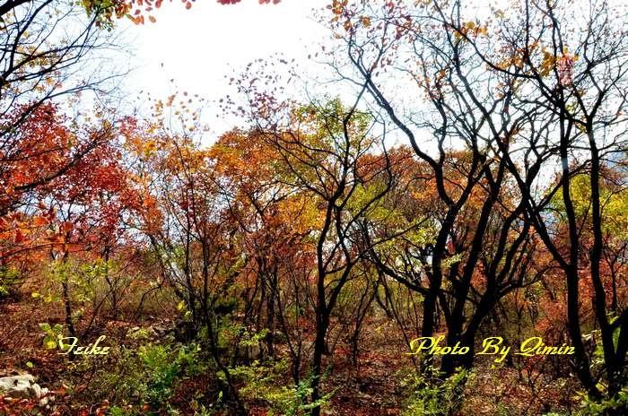 【原创影记】齐鲁观红叶——博山和尚房5 - 古藤新枝 - 古藤的博客