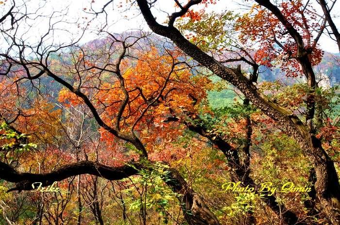 【原创影记】齐鲁观红叶——博山和尚房6 - 古藤新枝 - 古藤的博客