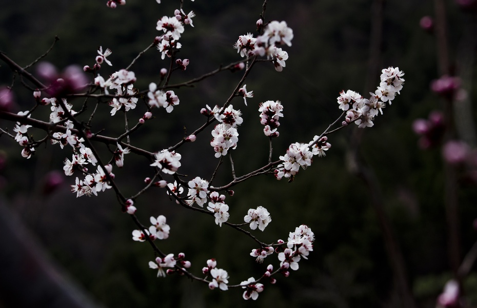 香山早春风光 - 侠义客 - 伊大成 的博客
