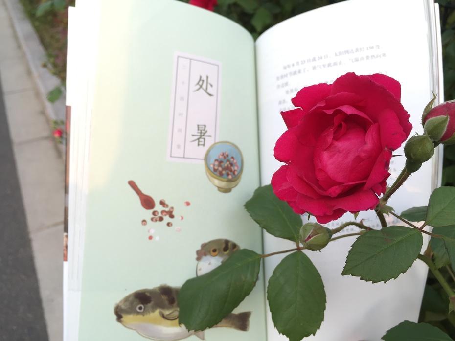 唯美食与美景不可辜负 - 蔷薇花开 - 蔷薇花开的博客