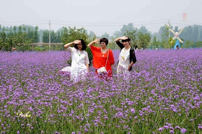 【原创影作】走进紫缘香草园(续) - 古藤新枝 - 古藤的博客