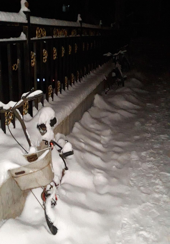 3月7日,下雪啦 - 淡淡云 - 淡淡云