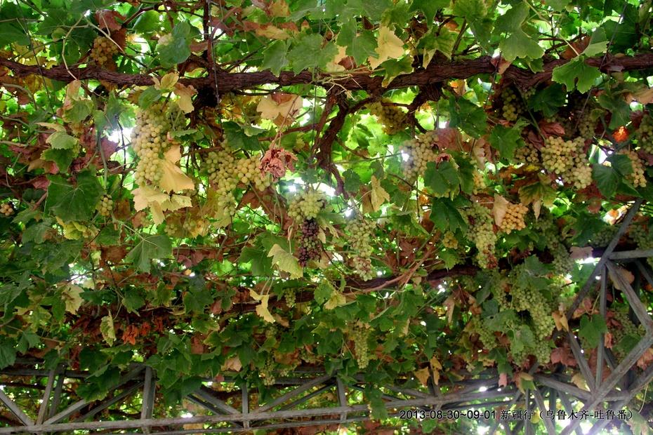 新疆吐鲁番葡萄晾房