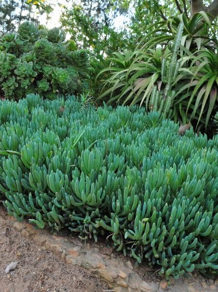 南非多肉植物(1) - lsbrk - 蓝色波尔卡的相册