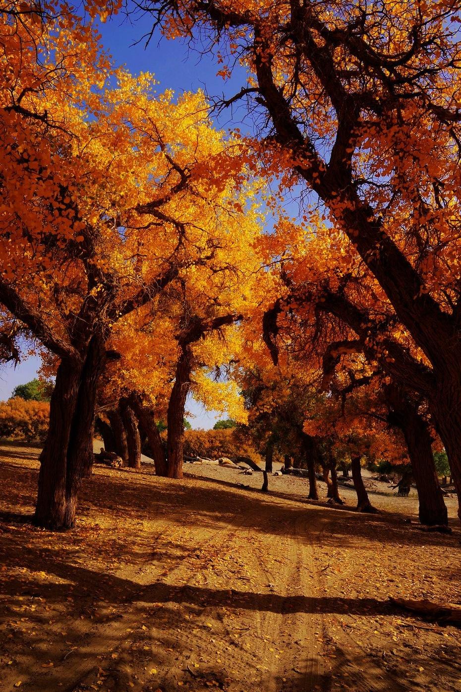 胡杨林:秋天的童话,天堂的色彩 - 余昌国 - 我的博客