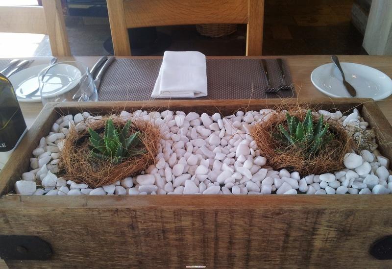 南非野生多肉植物2. - 小石頭 - 我明白你会来,所以我等