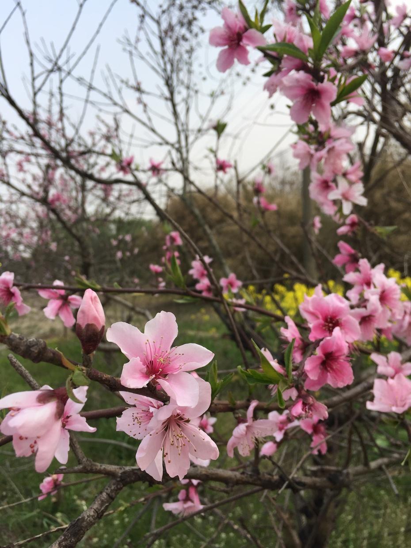 不负春光不负卿 - 蔷薇花开 - 蔷薇花开的博客