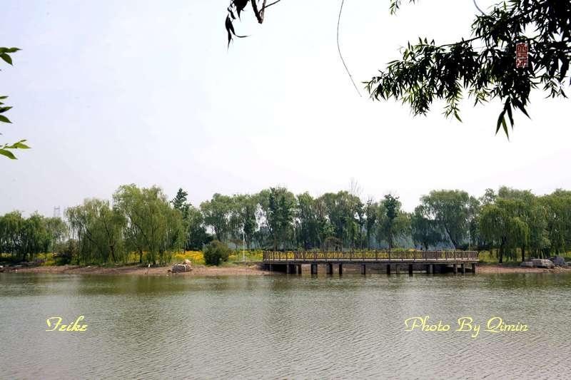 【原创影记】印象弥河湿地公园1 - 古藤新枝 - 古藤的博客