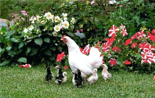完美中国人之品质,完美体现在变荒原成花园 - 追真求恒 - 我的博客