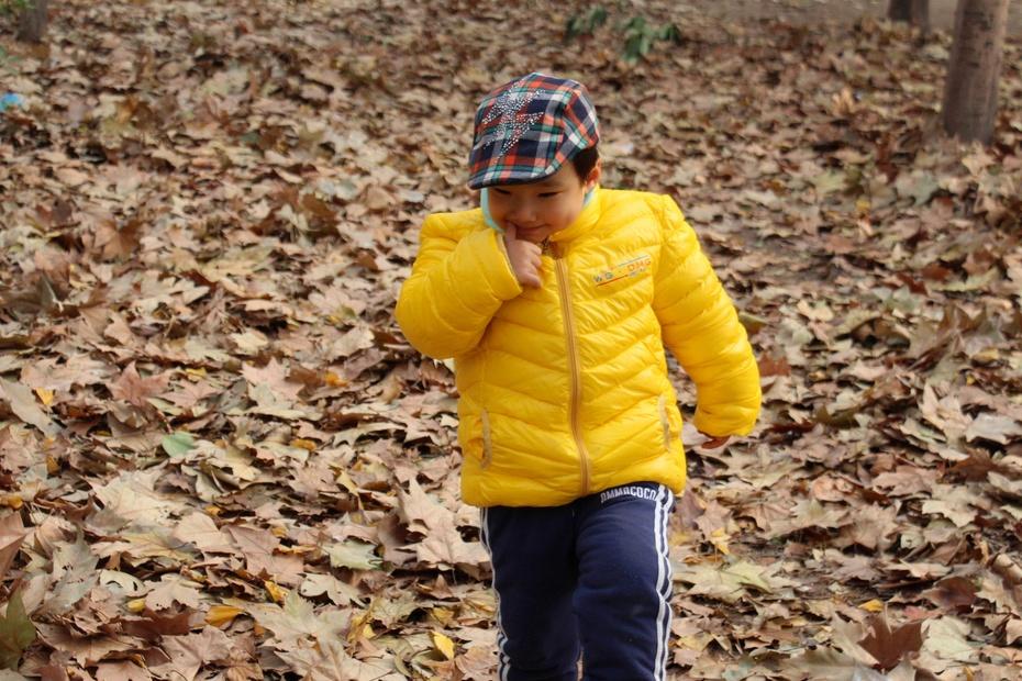 小树林里 与落叶的完美邂逅