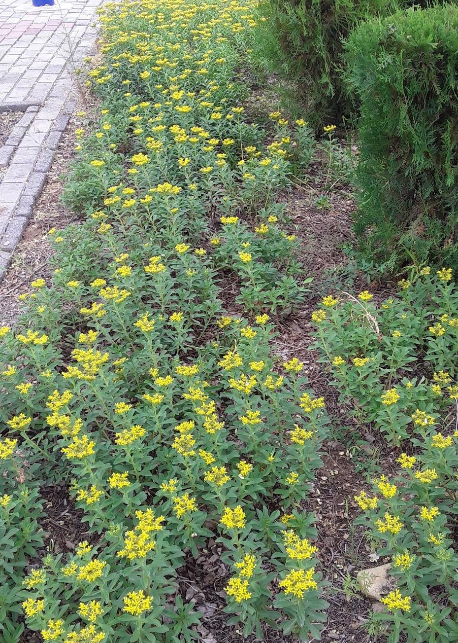 黄色小花: - 淡淡云 - 淡淡云