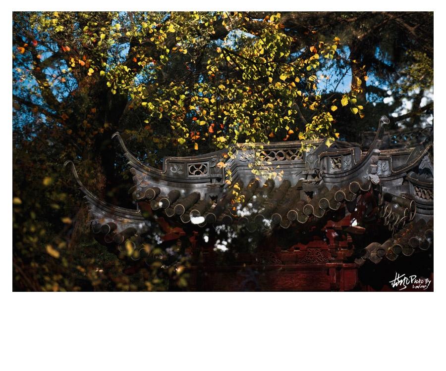 【上海】满园秋色关不住,一枝红叶出墙来 - 蓝风 - 蓝风的图像家园