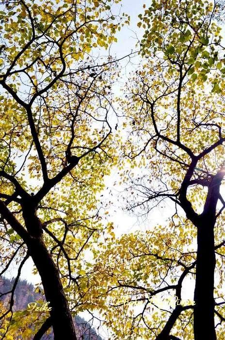 【原创影记】鲁中览秋色——临朐石门坊 - 古藤新枝 - 古藤的博客
