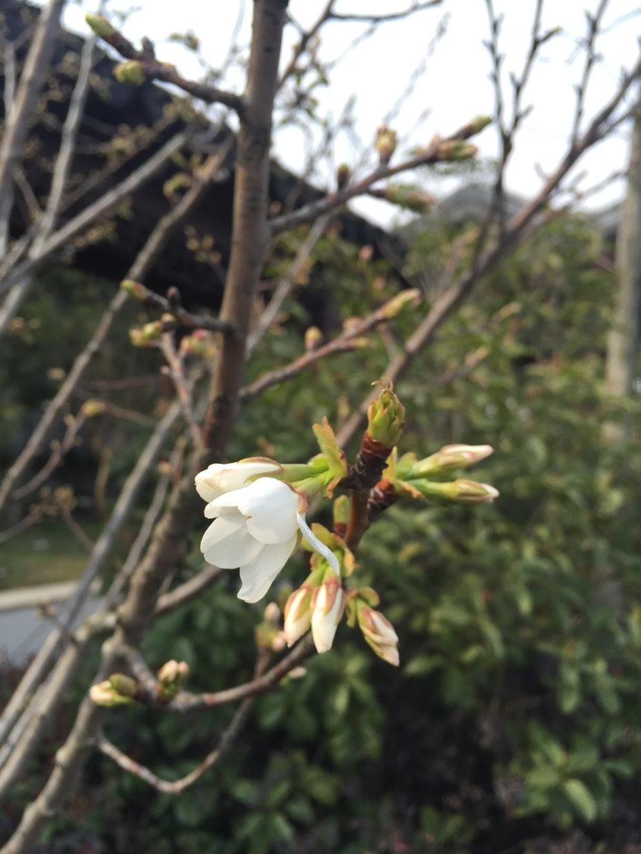 春游农创 - 蔷薇花开 - 蔷薇花开的博客