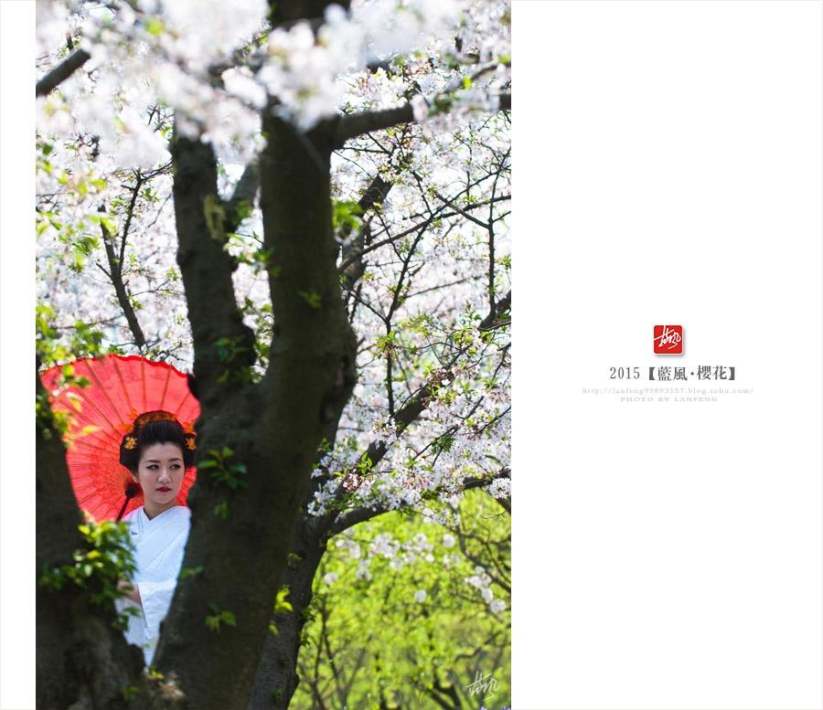 【上海】申城赏樱 繁花似锦入画来 - 蓝风 - 蓝风的图像家园