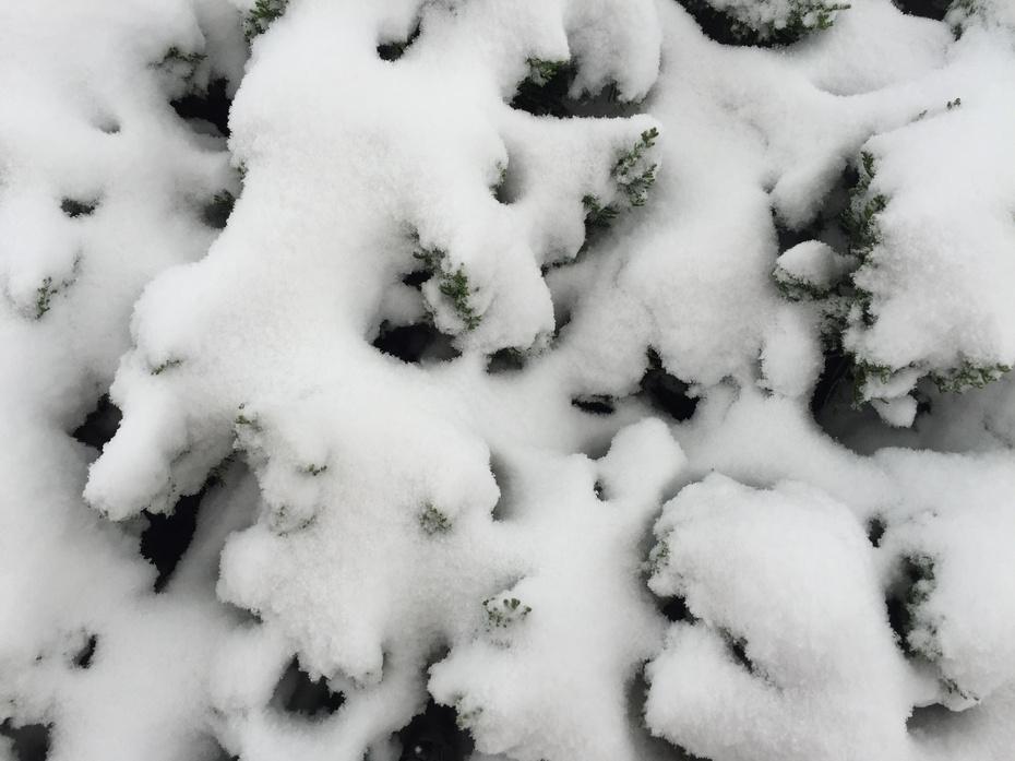 初雪 钢琴五线谱 打印