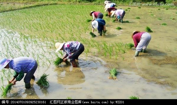 【原创】插秧季节 - lurenlaobao2009 - lurenlaobao2009的博客
