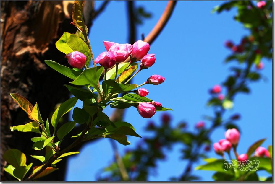 漂亮——北京的春天 - 下午茶馨 - 下午茶馨网易博客