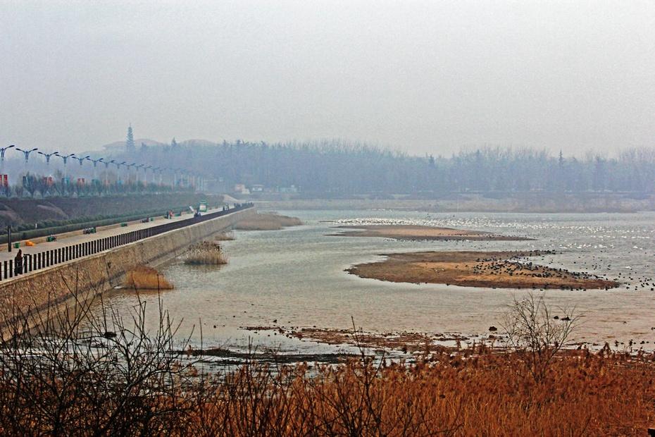 虢山岛湿地迎祥阁,天鹅湖清晨观天鹅--隆冬豫晋游之二 - 侠义客 - 伊大成 的博客