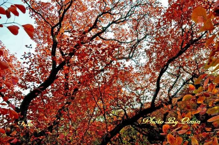 【原创影记】齐鲁观红叶——青州曹家庄2 - 古藤新枝 - 古藤的博客