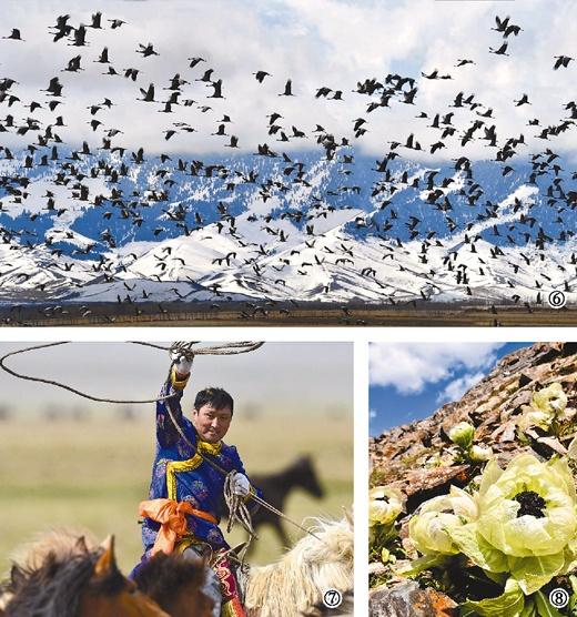 美丽的新疆天山 - 古藤新枝 - 古藤的博客