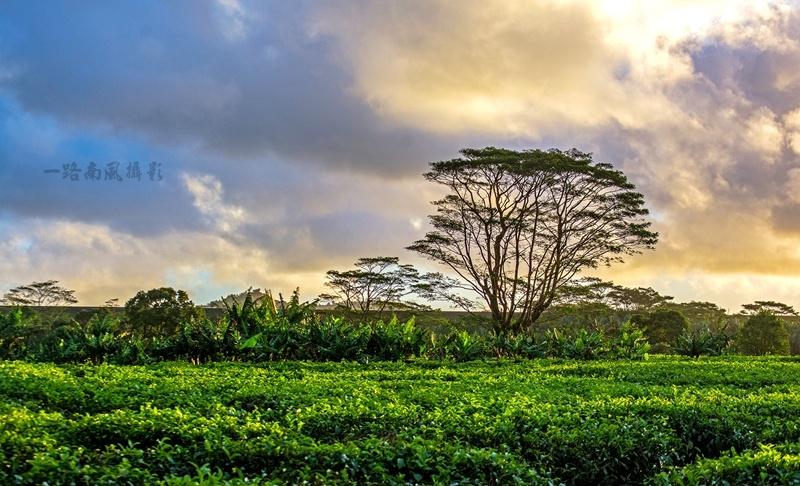 火山喷发后,非洲这片茶园美得窒息 - hubao.an - hubao.an的博客